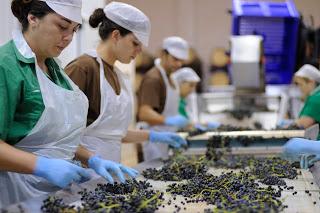 Wines of Jumilla, Spain